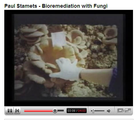 Paul Stamets - Bioremediation With Fungi